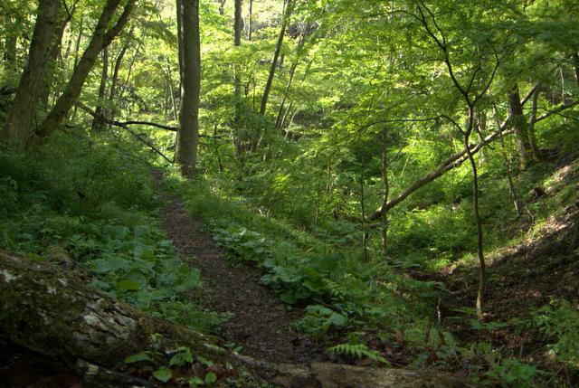 きもちのよい森林風景